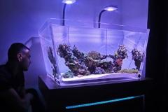 reef-4