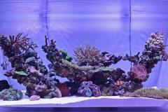 reef-5